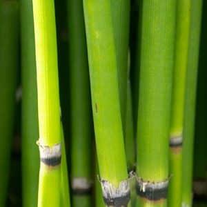 Bambou silice, Silicium organique et naturel pour votre bien-être articulaire