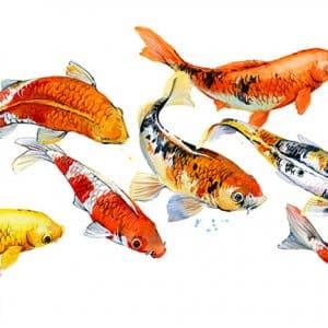 Comment est produite la laitance de poisson ?