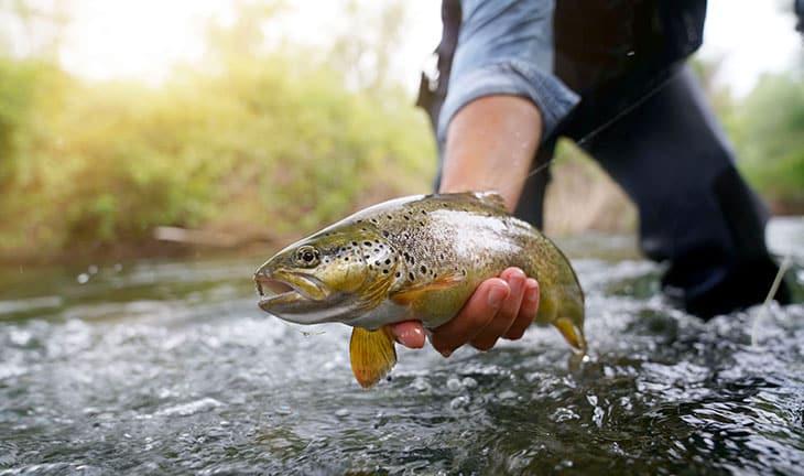 Laitance de poisson pour le bien-être du cerveau