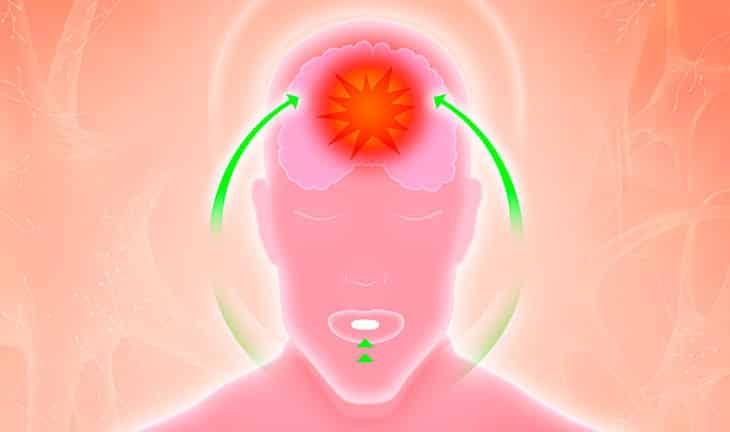 Améliorer la fonction cérébrale avec la phosphatidylcholine