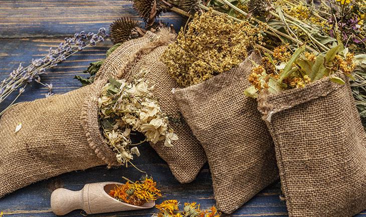 Quelles graines sauvages pour une meilleure santé ?